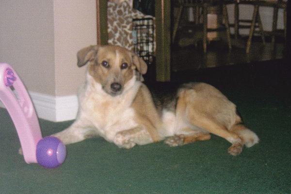 Adopt dog Marley