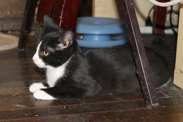 Adopt kitten Rascal.