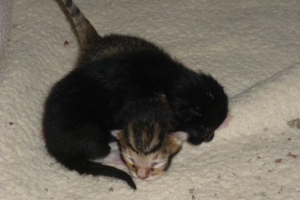 Smokey's Kittens