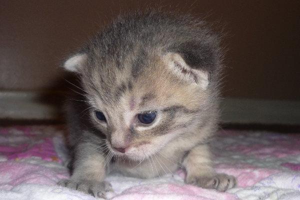 Gorgeous kitten Titan