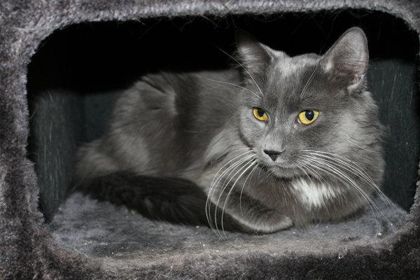 Adopt Cat Brunto