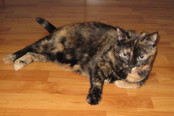 Adopt cat Fiona