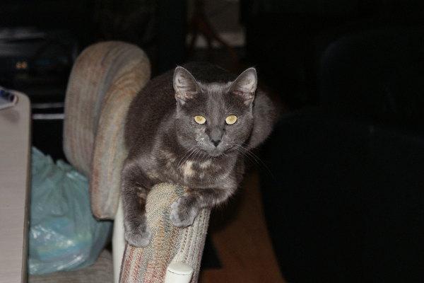 Adopt cat Molly