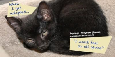 Adopt Kitten Topanga