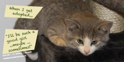 Adopt kitten Farrah