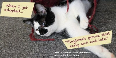 Adopt kitten Axel