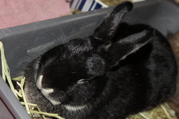 Caden. A Rabbit for adoption