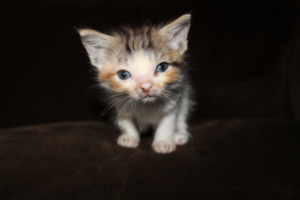 Abandoned kitten Cierra