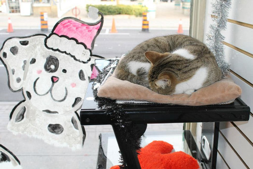 Kitten sleeping with holiday decorations