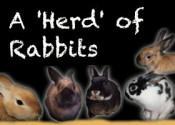 A Herd Of Rabbits For Adoption At Oasis