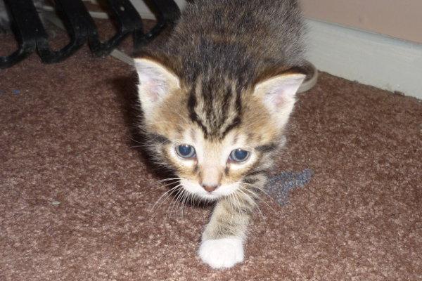Kitten named Bandit