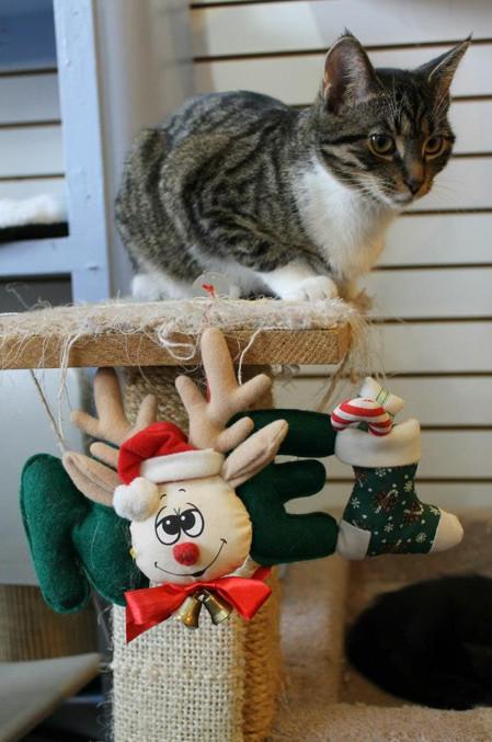 holidaycatsbridet