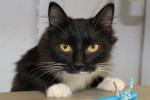 Heather. Her Kittens Adopted, She Finds A Home Too