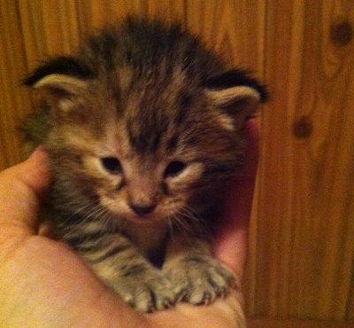 Kitten named Noelle
