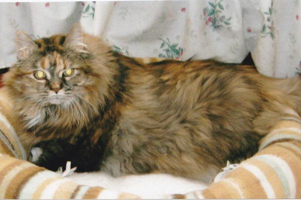 Adopt cat Emma