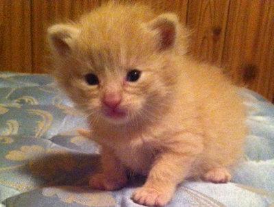 Kitten named Rudy