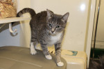 Smokey. Super Affectionate Cat Finds Forever Home