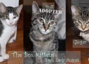 The adoptable box kittens at Oasis Animal Rescue
