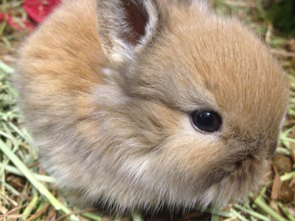 20 day old rabbit