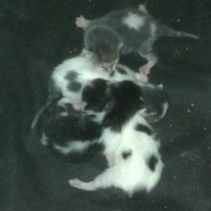 Shiloh's newborn kittens