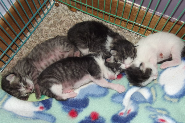 Four kittens for adoption.