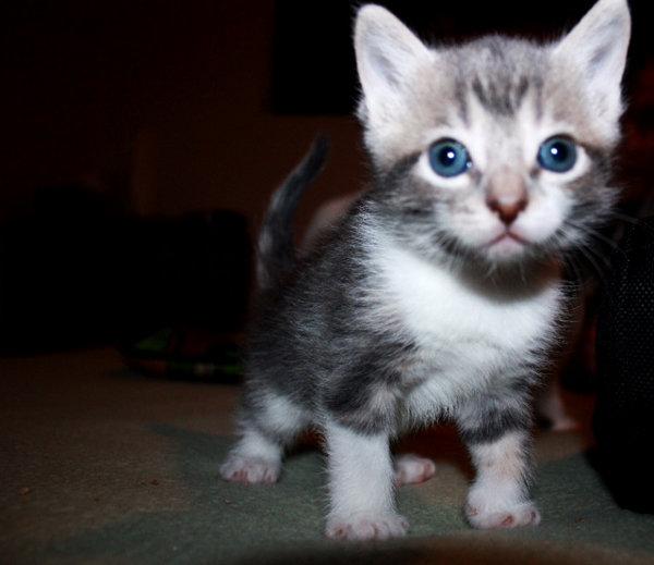 Leonard the kitten