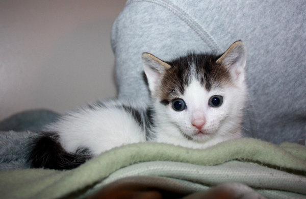 Penny. a rescue kitten