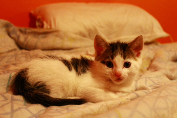 Penny, an adopted kitten