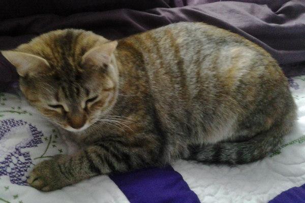 Nala. A cat for adoption at oasisanimalrescue.ca