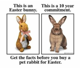 Easter Bunny Commitment