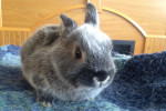 Baby Bunny Bailey Finds Forever Home