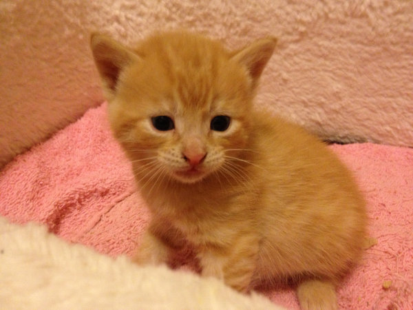 Kitten named Leo with funny look on his face