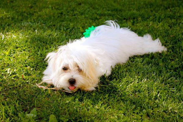 Maui, A dog for adoption at Oasis