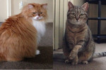 Ashes. Changed Circumstances Force Cat Re-Homing