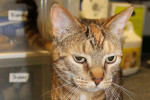 Cora. Unwanted Cat Left In Box On Doorstep. Now Adopted
