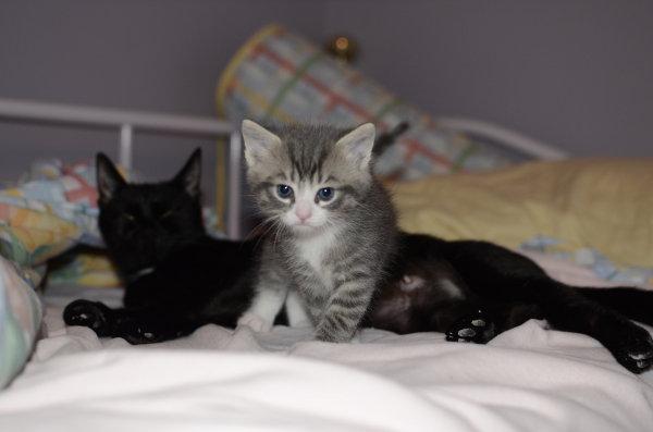 Kitten named Damon for adoption.