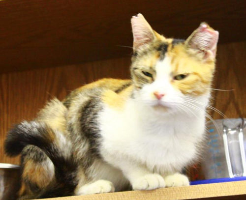 Adoptable cat named Hope