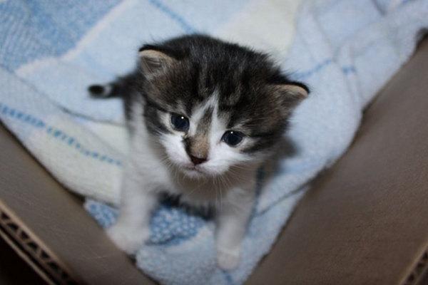 Female kitten named Lacey
