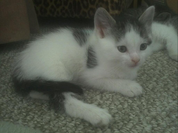 Kitten named Latte - first born. Likes kibble or kibble wet mix and is using the kitty litter.