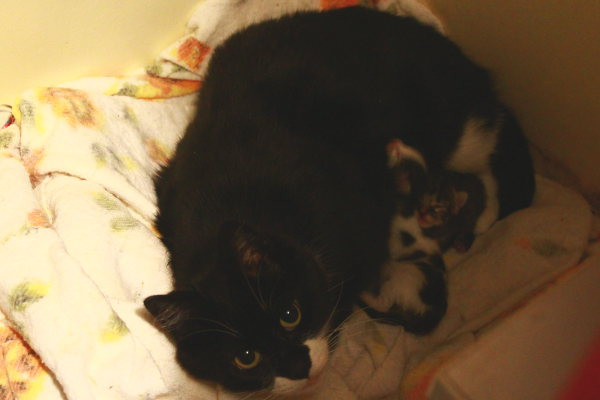 Frankie and her newborn kittens.