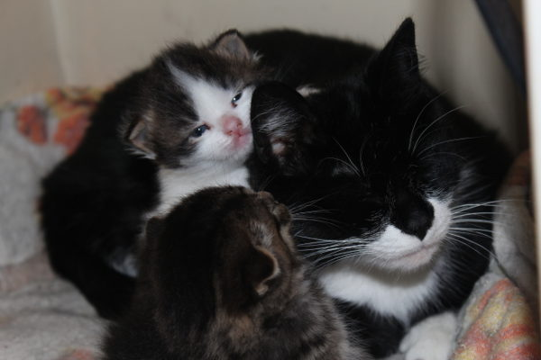 Frankie with her two kittens