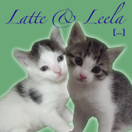 Latte and Leela. Adoptable kittens at Oasis Animal Rescue