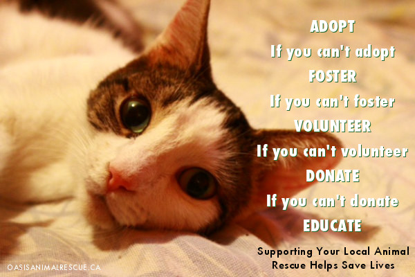 Support Your Local Animal Rescue Center