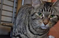 Adopt Cat named Autumn