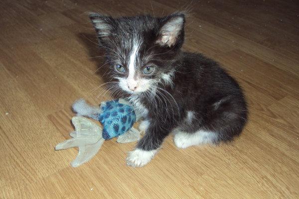 Kitten for adoption named Cherry.