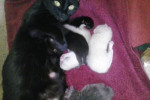 Cat named Daisy and her one week old kittens