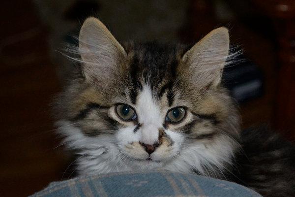 Kitten named Luke seeking new home