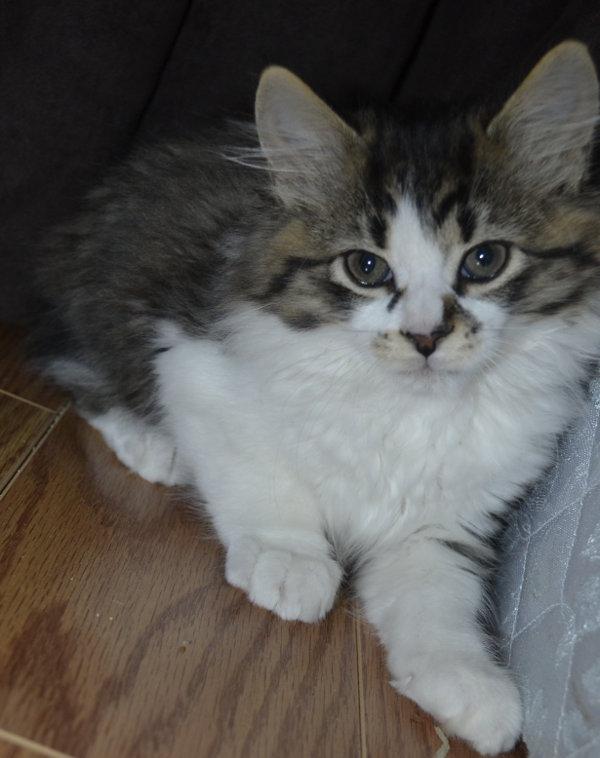 Kitten named Luke