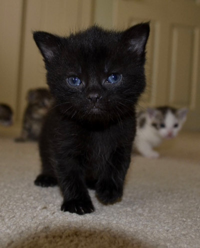 A kitten for adoption named 'Night'