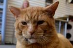 Orangie. Stray Cat Has Made Great Progress
